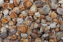 Seashells Collection Summer Background