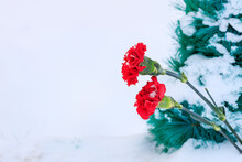 Two Carnations Against A Background Of White Snow And A Green Wreath