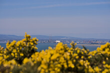 Beautiful Scenic Bright View Of Yellow Gorse (Ulex), Dublin Bay, Dublin Waste To Energy (Covanta Plant), Poolbeg CCGT, Pigeon House Power Station, Dublin Mountains Seen From Howth, Dublin, Ireland