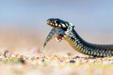 Portrait Of A Snake.