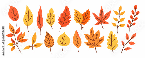 Fotografie, Obraz Set of different autumn leaves and twigs isolated on a white background
