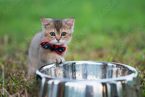 Kitten in a bow tie next to the pet food bowl Fotobehang