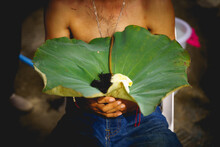 A Man Was Holding A Lotus Leaf With Hairs And Lotus Flower While Ordination.