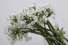 호아니 꽃사진