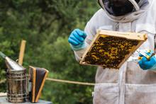 Male Beekeeper Using Bee Smoker In Apiary