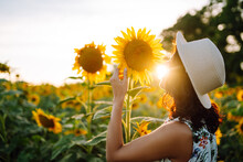 Young Woman Strolling Through Field With Sunflowers At Sunset. Carefree Woman Walking And Enjoying Beautiful Nature Environment. Summer Holidays, Vacation, Relax And Lifestyle.