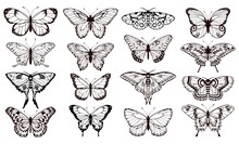 Butterfly Silhouettes Black Outline Butterflies Tattoo Graphic Vector Set Wedding Card Design