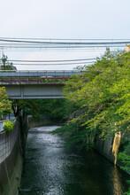 新緑の木々と川