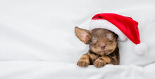 Cute Dachshund Puppy Wearing Red Santa Hat Sleeps On A Bed Under White Blanket At Home. Top Down View. Empty Space For Text