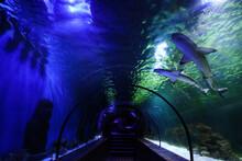Beautiful Glass Aquarium Tunnel In Modern Oceanarium