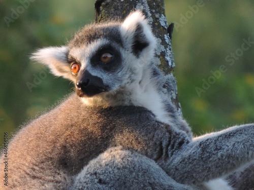 Fototapeta premium zoo de Granby