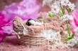 Szczeniak Border Collie na różowym kocyku w koszyku. Słodkie, urocze pieski, malutkie szczeniaczki. Rasowe Border Collie, Border collie merle, blue merle