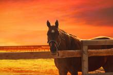 Horse At Sunset - Orange Blurred Equistrian Background