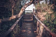 Senderos, Mesas Y Puentes De Madera Perdidos En El Bosque