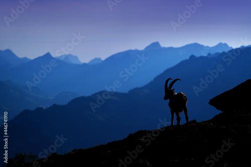 Switzerland wildlife Fototapet