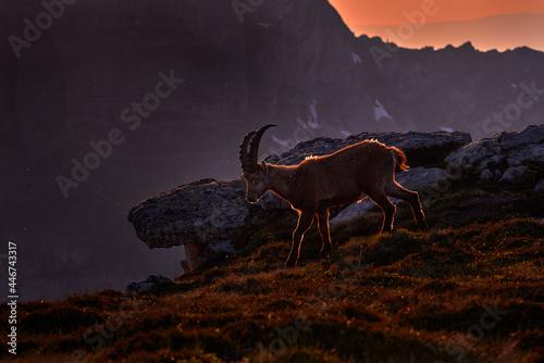 Tablou Canvas Switzerland wildlife