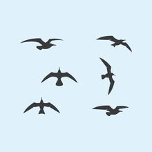 Seagul Bird Illustration