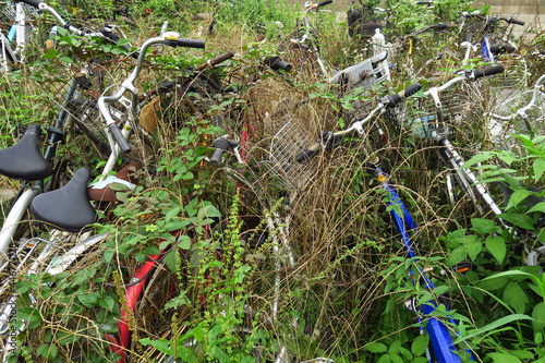 Cuadros en Lienzo 草むらに放置された自転車