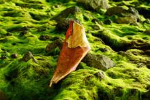 A Dry Leaf Lying On The Mossy Rocks