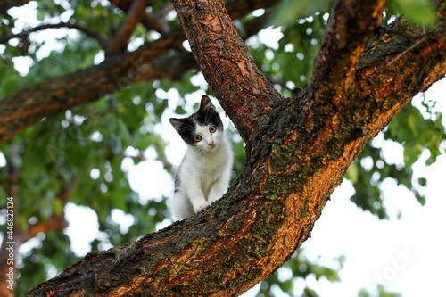 Fototapeta premium cat on tree, cat in the tree