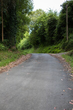 Country Asphalt Road Between Atlantic Trees And Many Dry Leaves In The Edges.