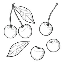 Hand Drawn Cherry. Black And White. Vector Illustration, Isolated On A White Background.