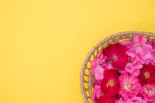 Closeup Shot Of Fresh Pink Hungarian Roses On A Woven Basket Isolated On Yellow Background