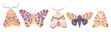Watercolor Illustartion With Exotic Butterflies, Moths Set Isolated On White Background. Perfect For You Unique Creation, Print, Wallpaper, Greeting Card, Invitations Etc.