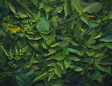 Foliage Background With A Variety Of Vibrant Plant Leaves Showing A Diverse Ecosystem And The Biodiversity Of Nature.