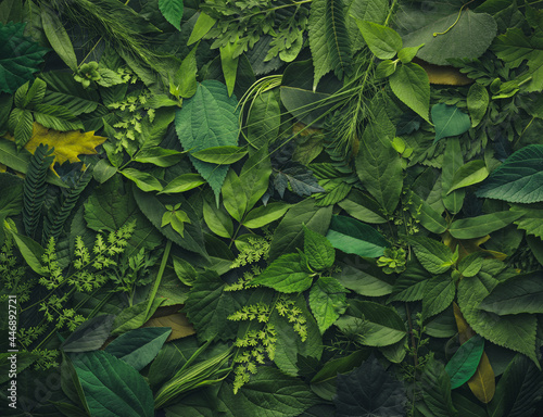 Foliage background with a variety of vibrant plant leaves showing a diverse ecosystem and the biodiversity of nature Fototapet