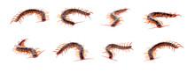 Set Centipede On White Background