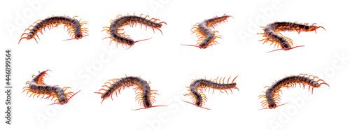 Tela Set centipede on white background