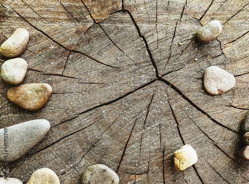 Obraz na plátně Top view of rocks on a tree trunk