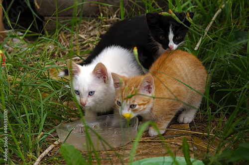 Fotografie, Obraz the motley cat family has its lunch