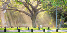 Light Shining Through Native Raintree, Darwin Botanic Gardens
