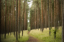 Curonian Spit National Park Forest
