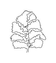 Linden, Beech, Elm Tree One Line Art. Continuous Line Drawing Of Plants, Herb, Tree, Wood, Nature, Poplar, Maple, Ash, Chestnut, Oak, Elm.