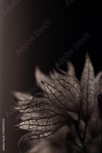 Fotografija Vertrocknet