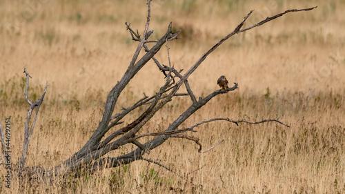 Valokuva bird, natur, tier, wild lebende tiere, falco, adler, greifvogel, schnabel, ast,