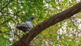 Ptak gołąb na gałęzi drzewa w parku