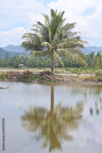 Canvas Print palm trees on the shore of the fishpond