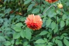 Una Planta De Hojas Naranjas En Un Bosque De Arboles Y Plantas De Hojas Verdes