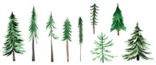 Christmas Trees Watercolor Set Of Elements. Template For Decorating Designs And Illustrations.