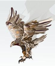 Flying Eagle Bird Of Prey Vector Illustration