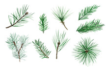 Coniferous Tree Branches Watercolor Elements Set. Template For Decorating Designs And Illustrations.