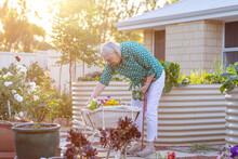 Elderly Woman Tending Garden With Sun Flare