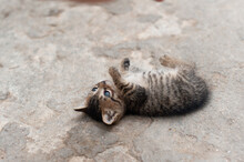 Small Wild Cute Kitty Playing And Laying On The Ground