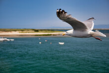 Seagull Flies Over The Sea Bay And The Sandy Shore. Copy Space