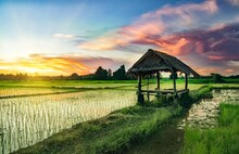 Landscape View Of The Hut,cottage In The Middle Of The Rice Field In The Evening In Asia Thailand, The Atmosphere Of Vacation And Travel.