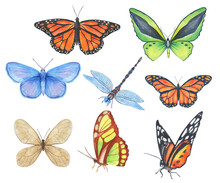 Set Of Watercolor Butterflies And Dragonfly Isolated On White Background. Bright Green, Blue, Orange Monarch Butterfly Sits Folded Wings.